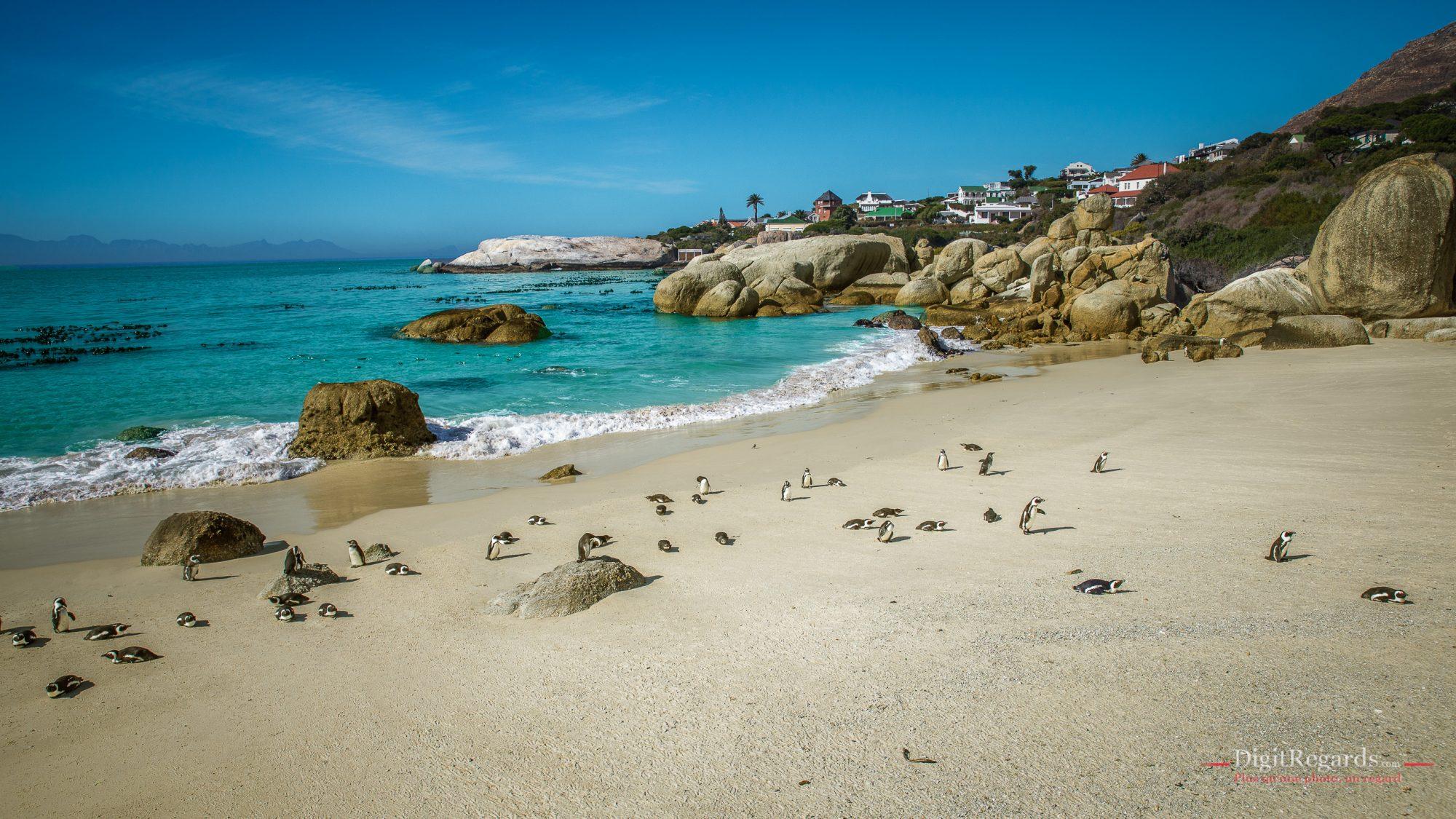 La Boulders Beach et ses manchots en Afrique du Sud