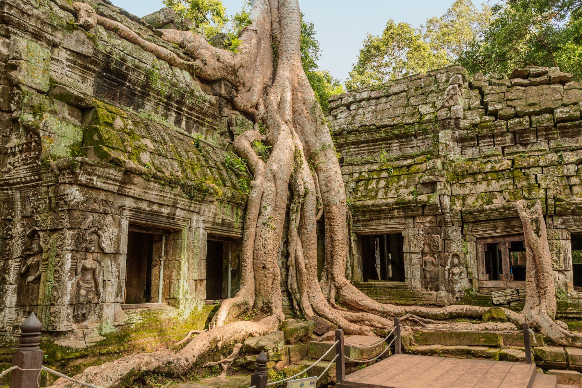Temple Ta Prohm Siem Reap Cambodge 2012